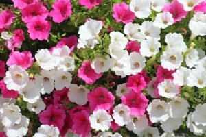 plantas y flores de verano
