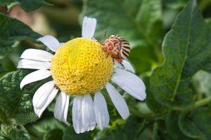 Plagas del jardín. Como eliminarlas