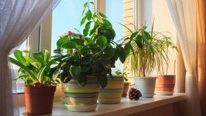 que hacer con las plantas en vacaciones